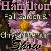 Hamilton Fall Garden And Chrysanthemum Show
