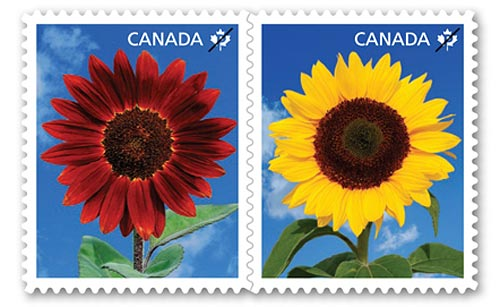 Canada Post Sunflowers