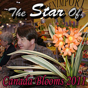 The Star Of Canada Blooms