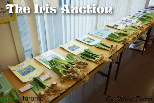 Iris Sales Table